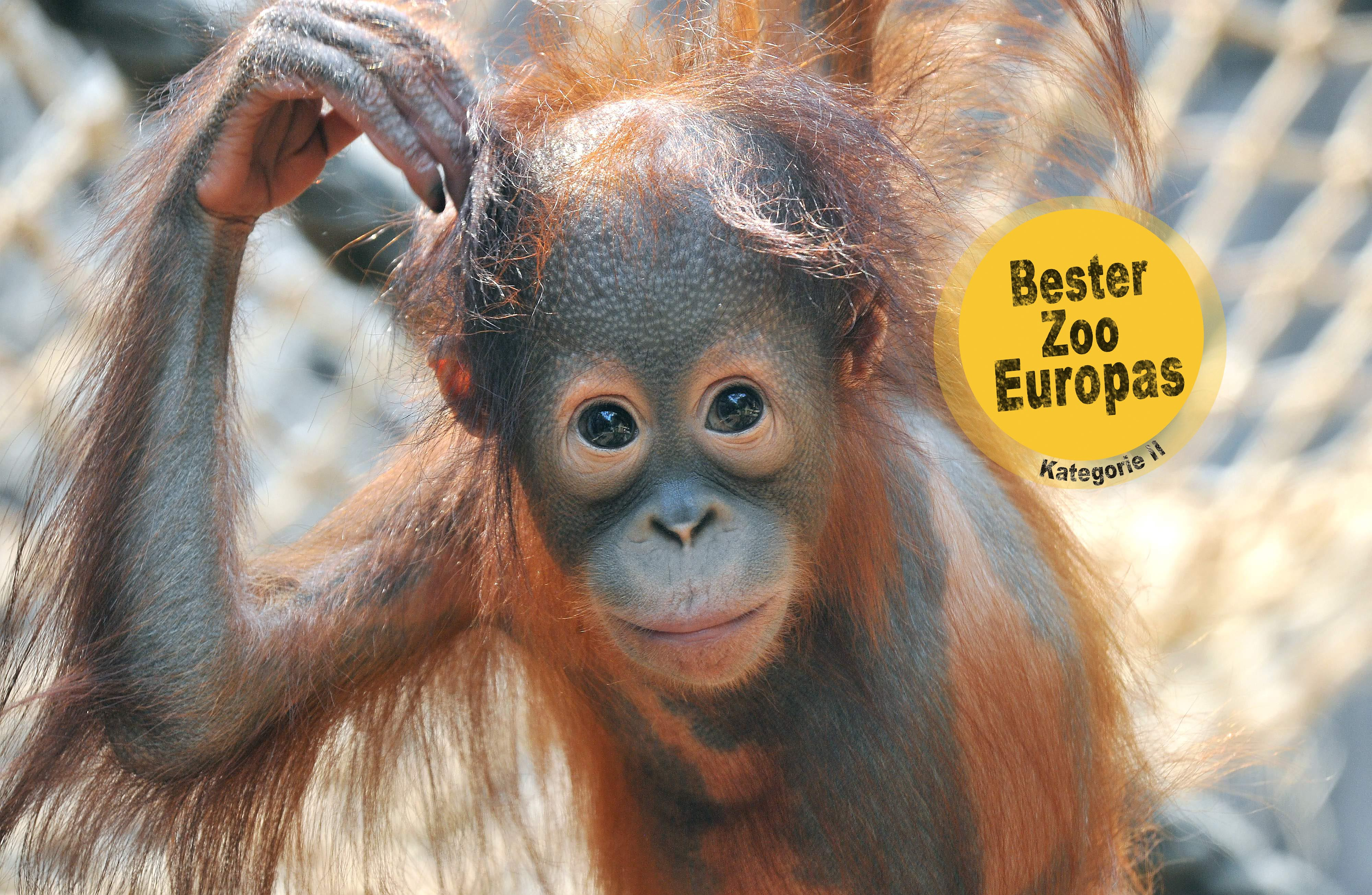 Zoo Rostock - Zoo Rostock - Tierwelten entdecken und Abenteuer erleben