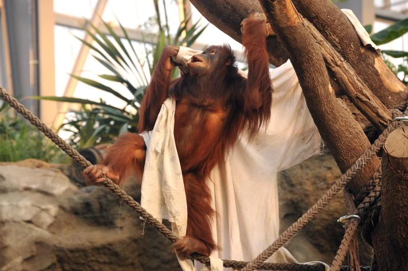 DARWINEUM im Zoo Rostock - Dem Ursprung des Lebens auf der Spur
