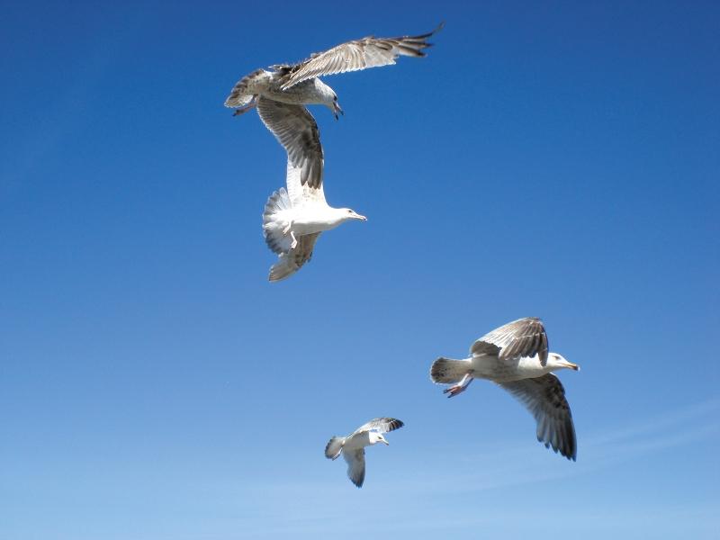 Vögel an der Ostsee - Vogelarten