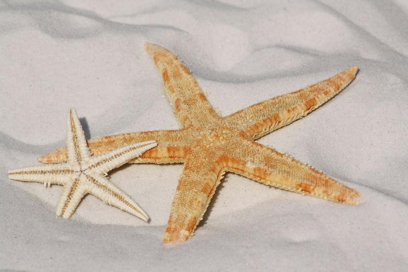 Seesterne - Sterne in der Ostsee